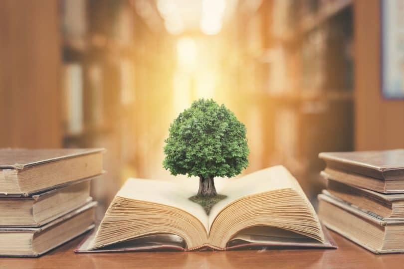 Pequena árvore saindo de dentro de livro numa biblioteca