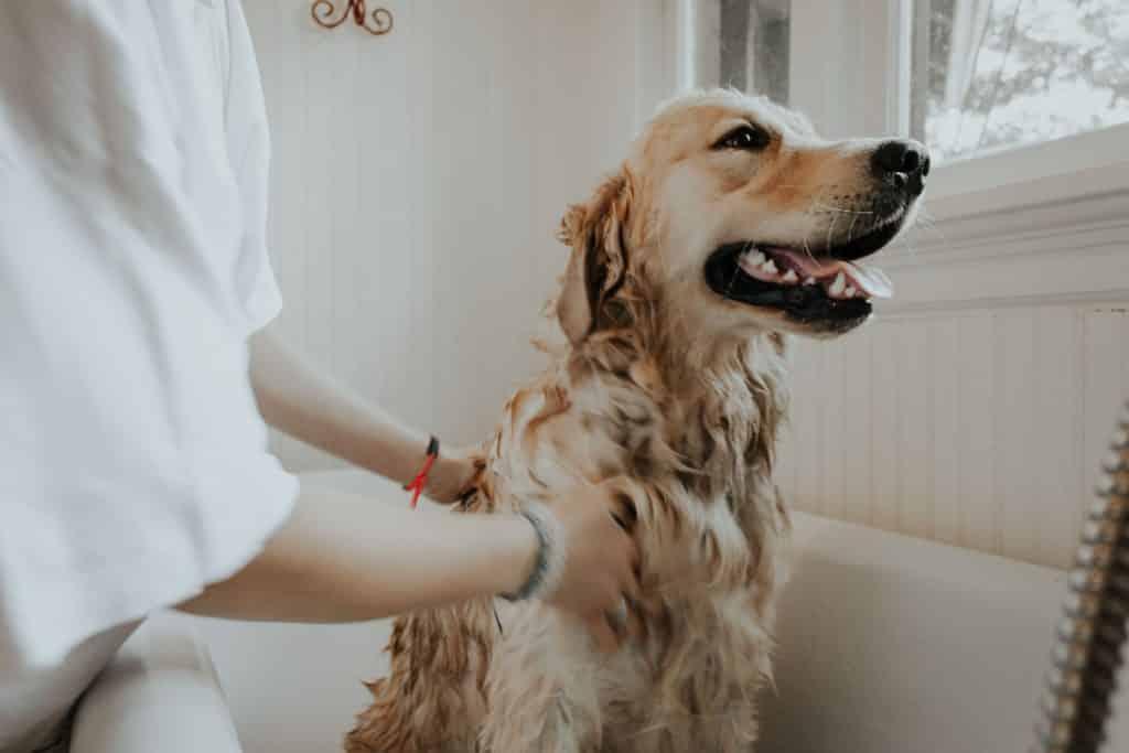 Pessoa dando banho em um cachorro na banheira