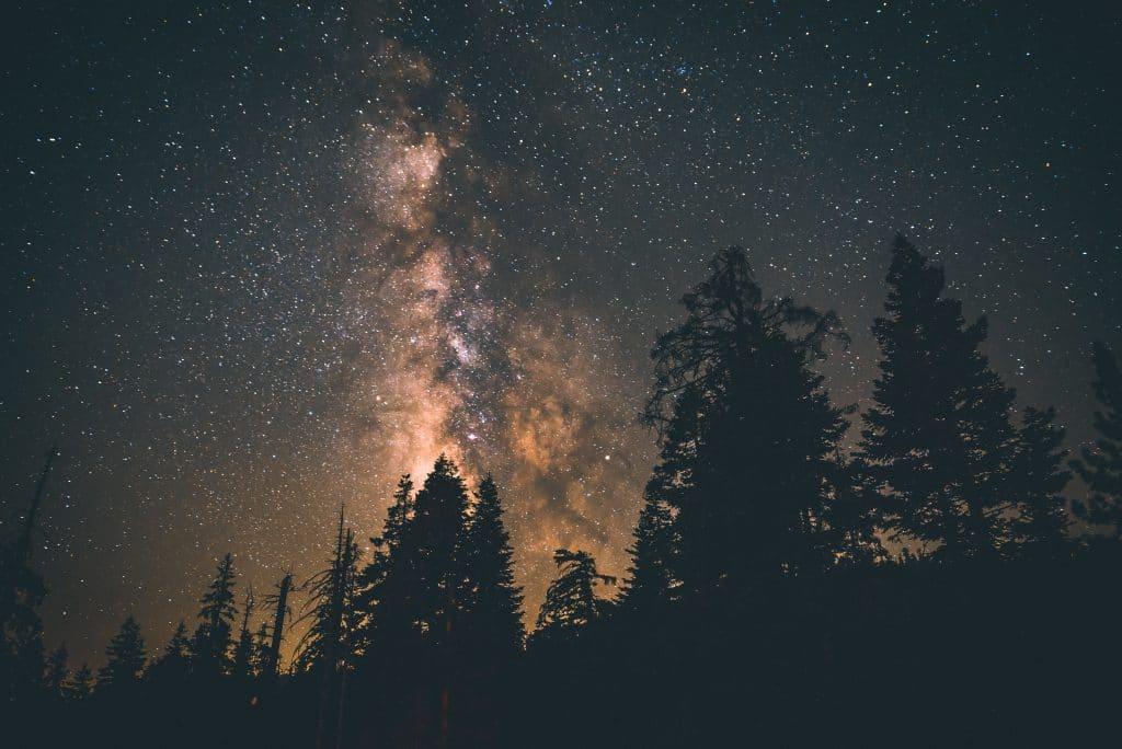 Silhuetas de árvores com o céu estrelado.