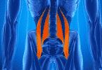 Imagem ilustrativa do músculo Psoas