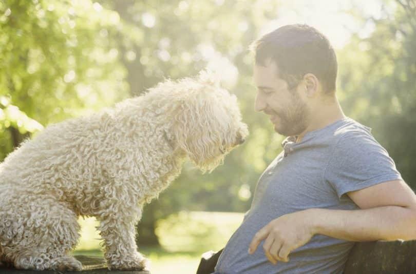 Homem sentado com cachorro em seu colo e sol refletindo