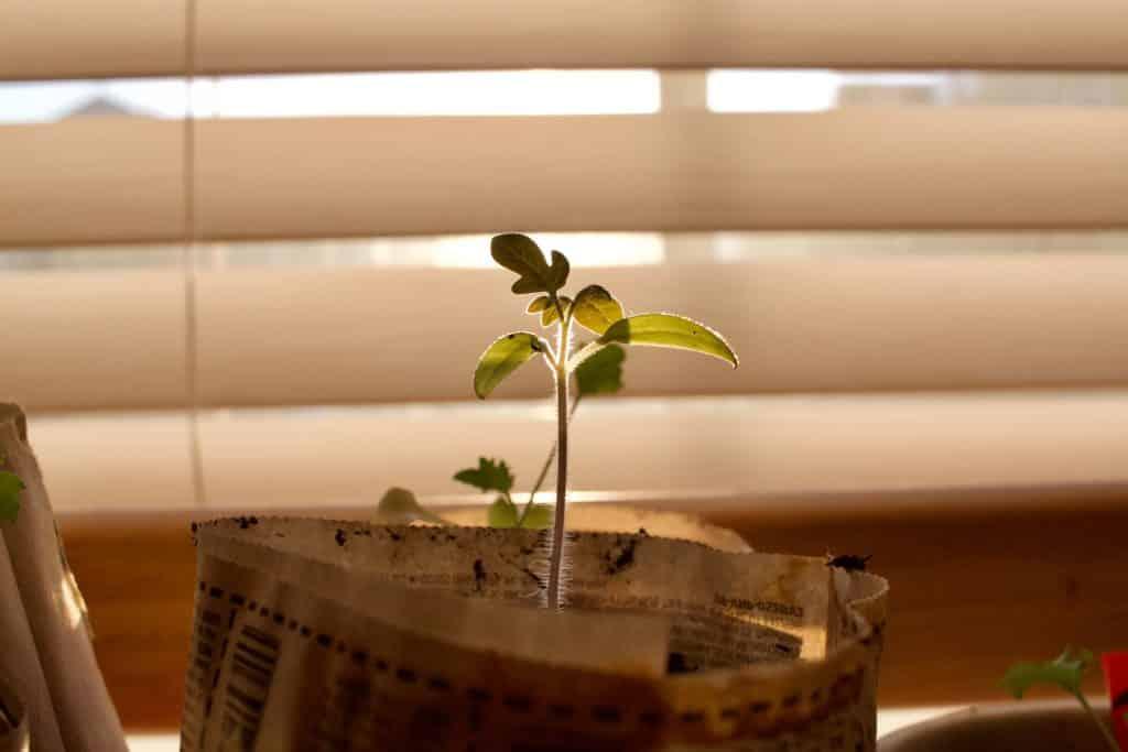 Plantinha ao lado de uma janela