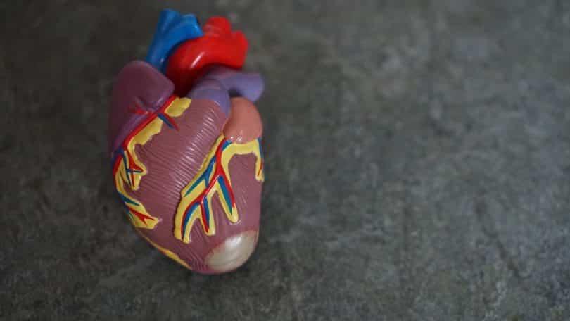 Anatomia de coração