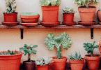 Plantas no vaso em casa