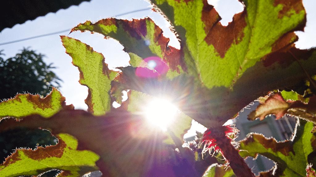 Planta recebendo raios solares