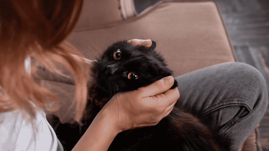 Gato preto recendo carinho da dona