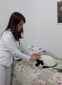 Demonstração de Reiki em Animais