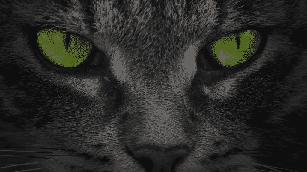 Gato preto do olho verde