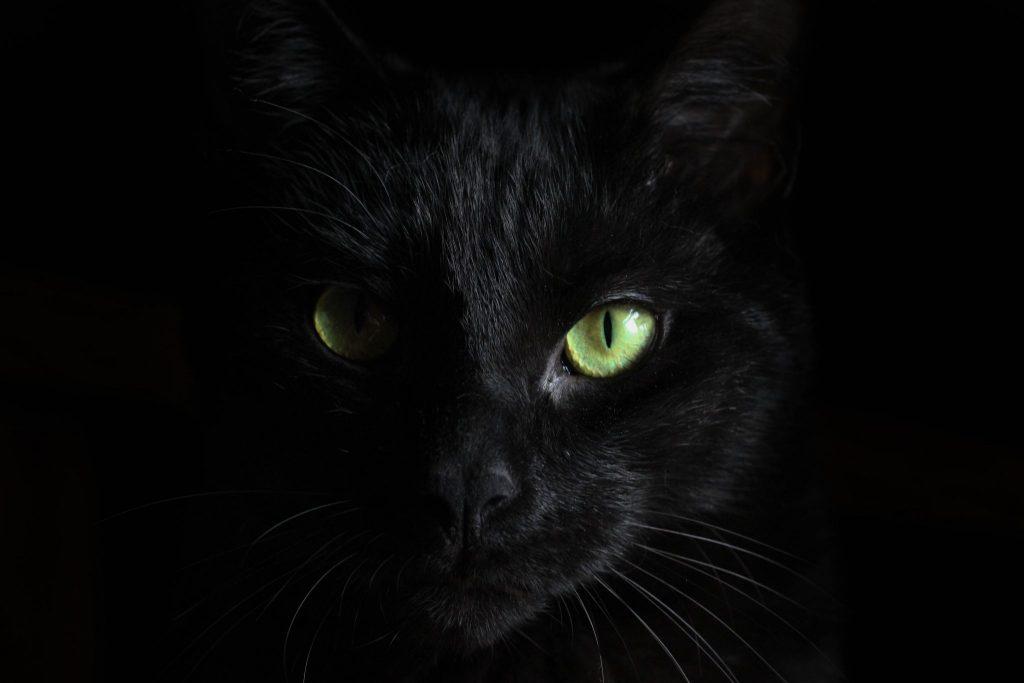 Foto do rosto de um gato preto com olhos verdes.