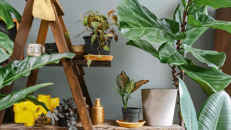Quarto com várias plantas