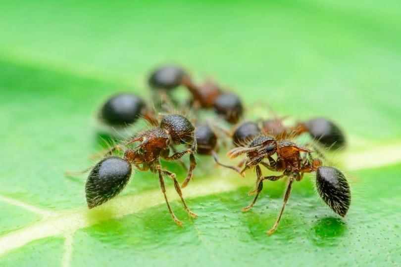 O Que Podemos Aprender Com Uma Formiga Eu Sem Fronteiras