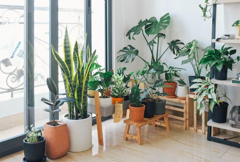 Vasos de diversos tipos e tamanhos em uma sala