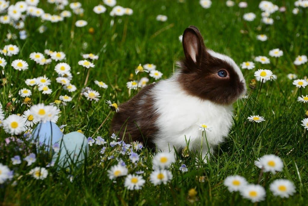 Coelho em um jardim ao lado de flores