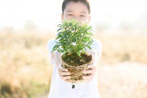 Thin focus on hand Child holding young seedling plant in hands on dry land to plant on soil. Concept Earth day