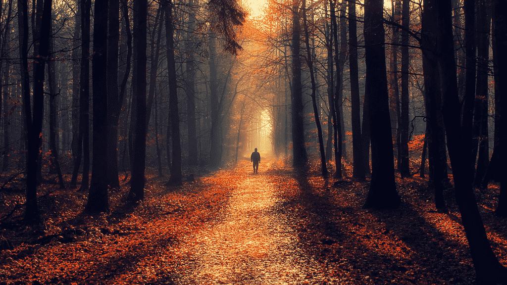 Silhueta de pessoa caminhando na floresta