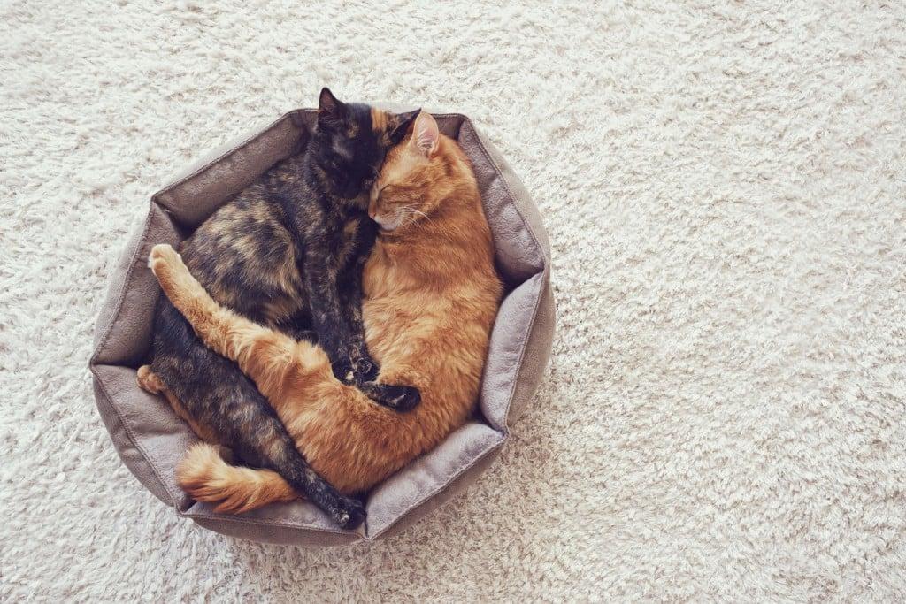 Gatos abraçados dormindo em uma caminha apertada