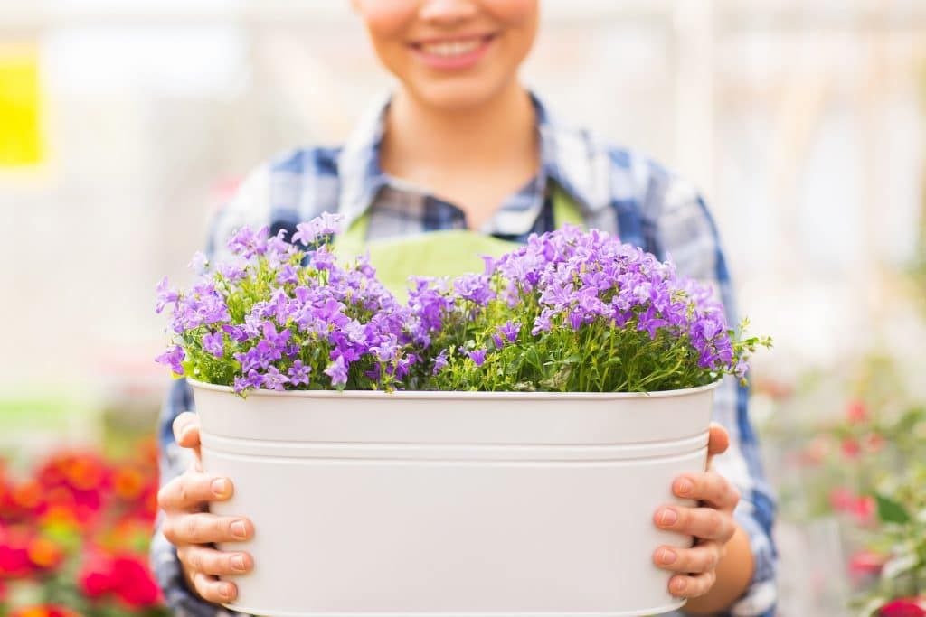 people, gardening and profession concept - happy woman or gardener holding flowers in big pot at greenhouse