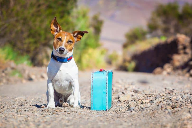 Faa da sua casa um lar temporrio para animais - Eu Sem Fronteiras