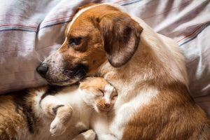 A brown dog and cat wake up hugging from a nap