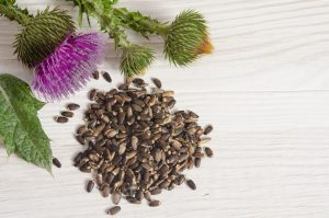 Seeds of a milk thistle with flowers (Silybum marianum Scotch Thistle Marian thistle ) on wooden table