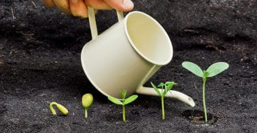 hand watering plants growing in sequence of seed germination on soil, evolution concept