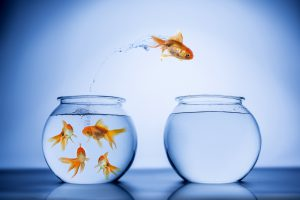 Gold Fish jumping from one fish bowl to another