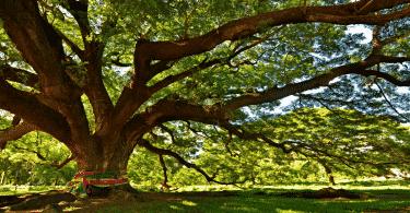 Árvore grande em um campo aberto