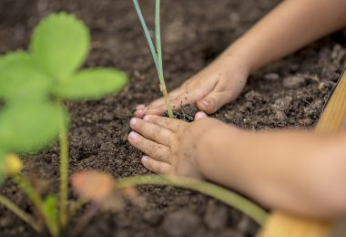 Child planting a young plant seedling into a raised flower bed compacting the soil around the roots with their hands close up view.