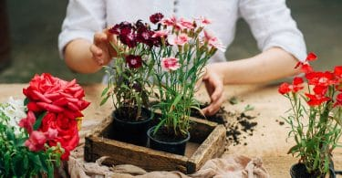 Gardener doing gardening work at a table rustic. Working in the garden close up of the hands of a woman cares flowers carnations. Womans hands. Garden tools with flowers.