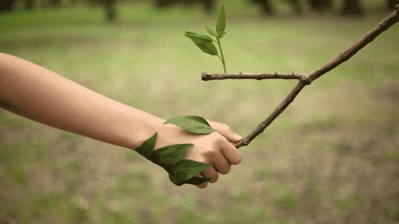Mão humana segurando galho de árvore