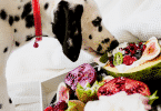 Cachorro comendo frutas