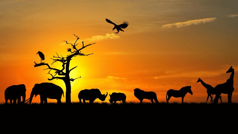 Silhueta de animais selvagens andando durante o pôr do sol
