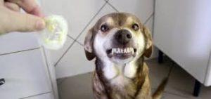 Esse é o Ninão, cachorro que fez sucesso na web