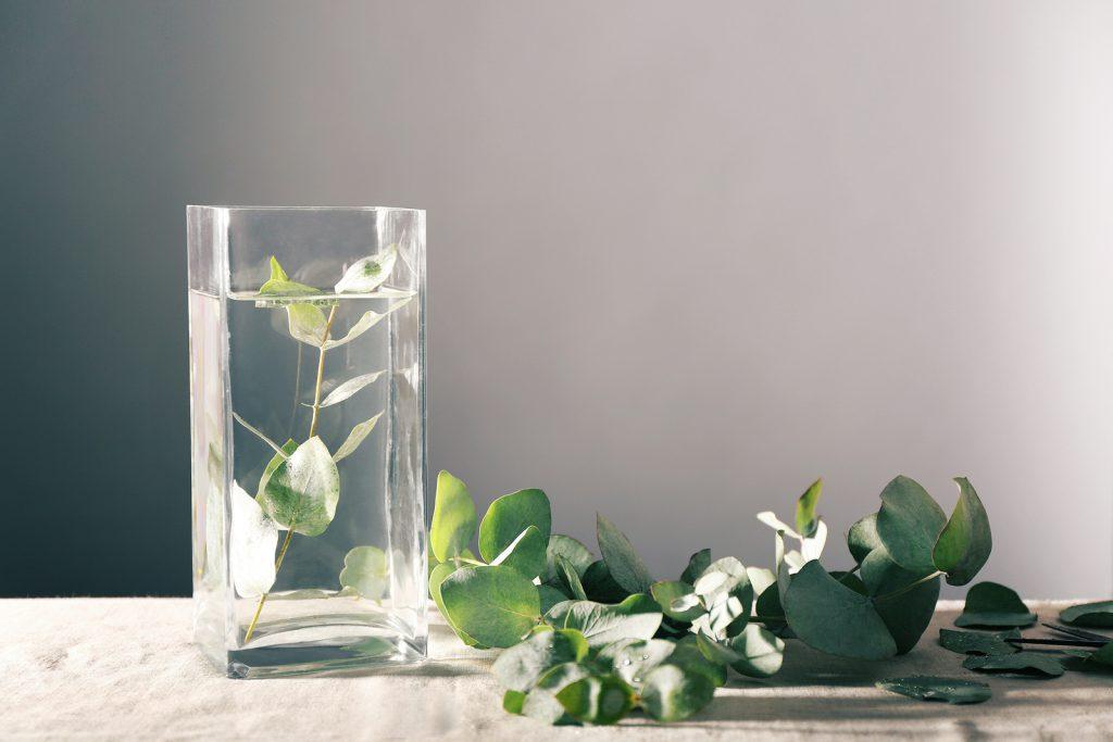 Folhas de eucalipto em uma mesa, com um copo de água ao lado, e algumas folhas dentro do copo.