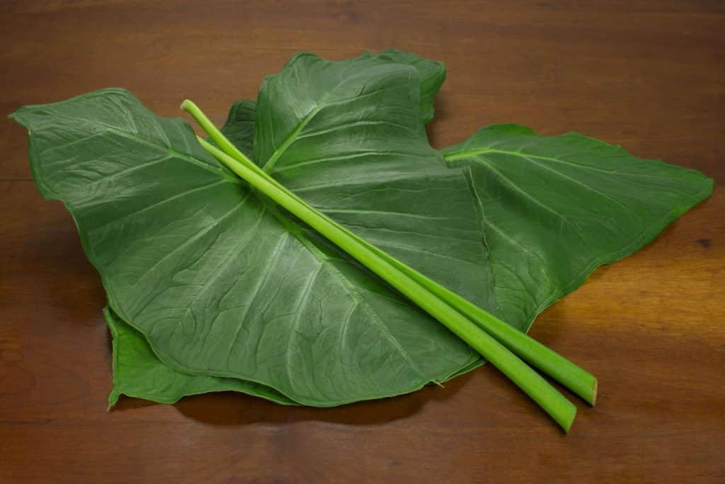 Planta taioba em uma mesa de madeira