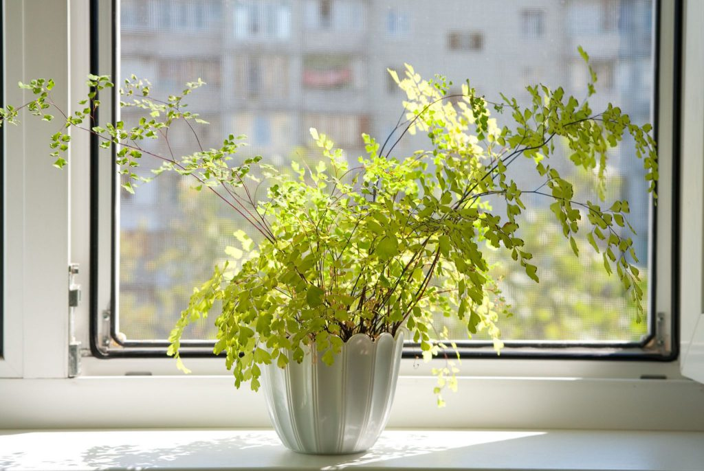 plantas amarelas