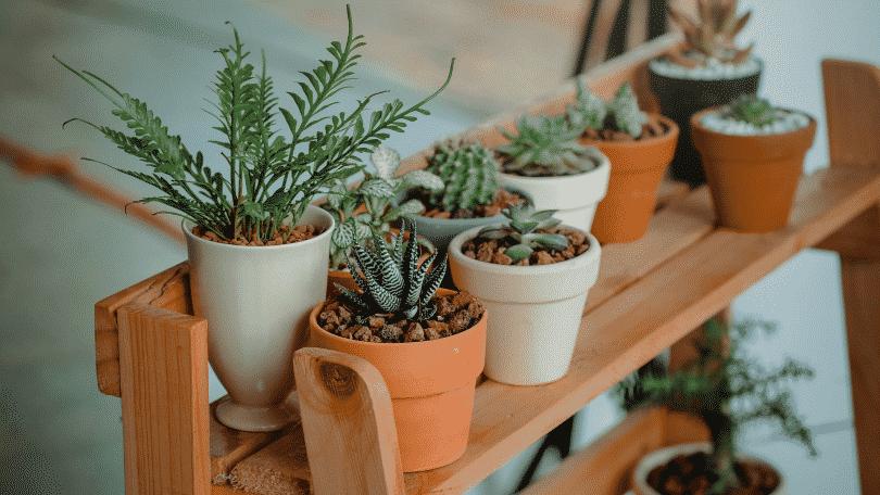 Vasos de plantas dentro de casa