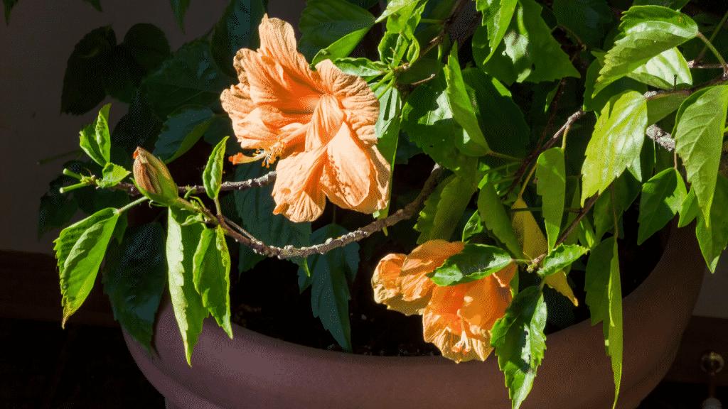 Flor no vaso tomando sol