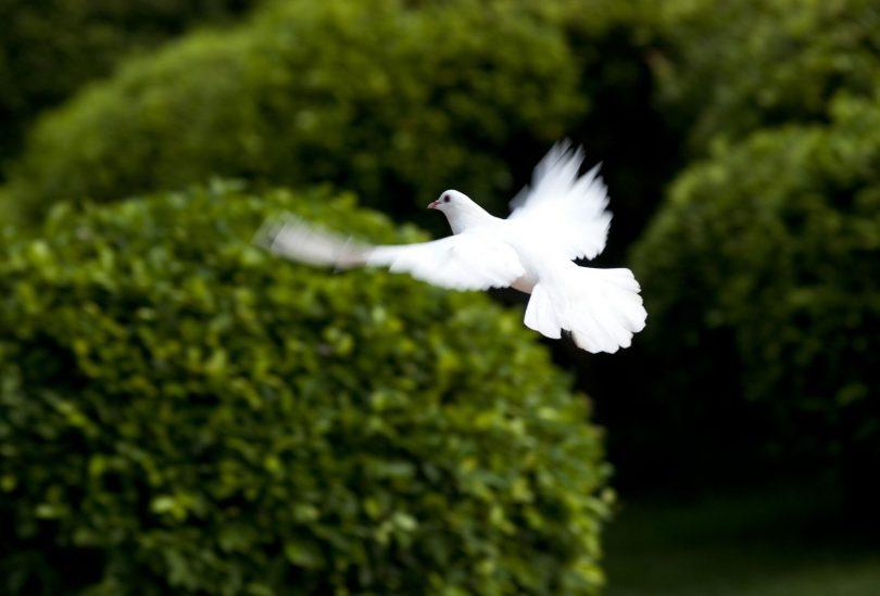 desejo de paz