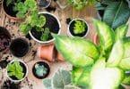 Vasos com plantas.