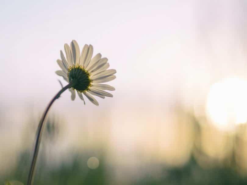 beleza da vida