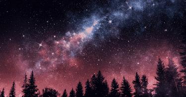 Noite estrelada em uma floresta