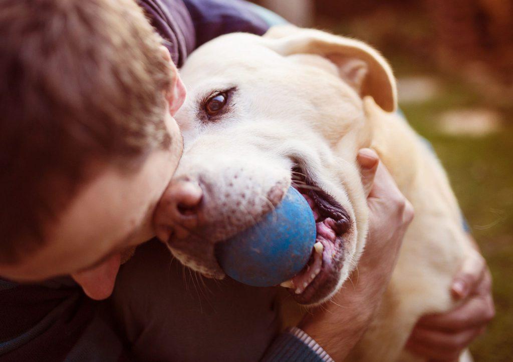 curar animais
