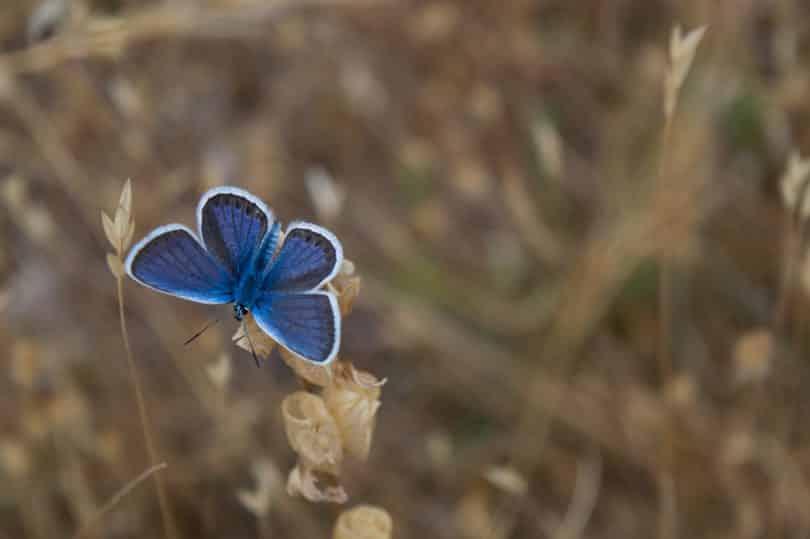 Borboleta pousada em uma flor