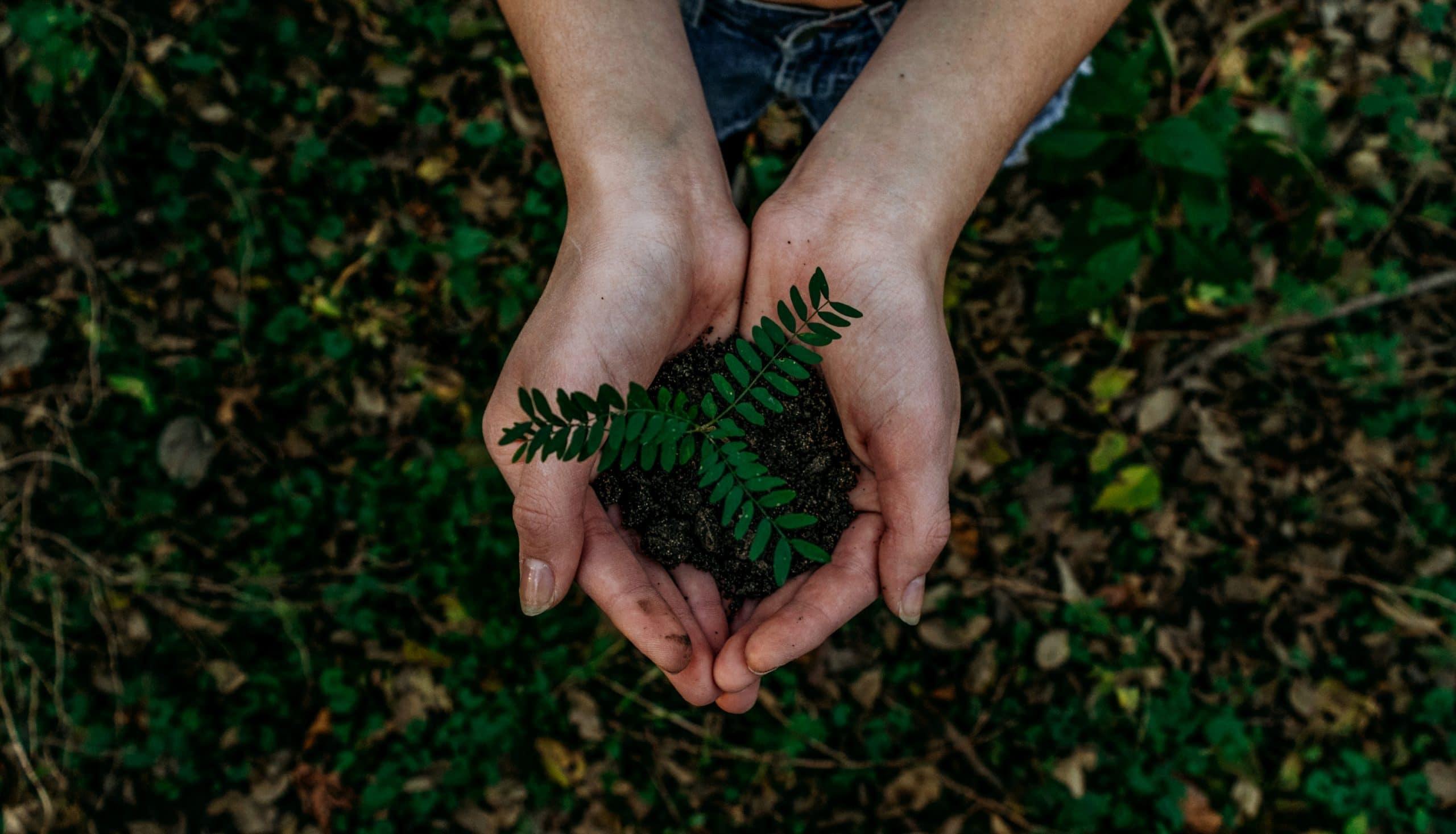 Mãos unidas segurando muda d eplanta vista de cima
