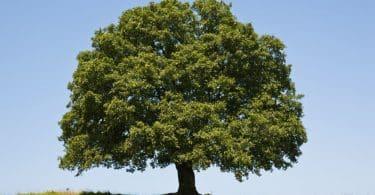Grande árvore isolada vista em um parque, durante o dia.