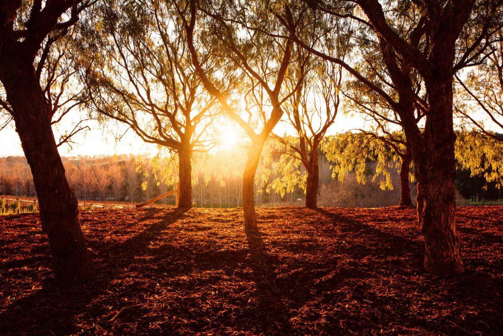 Bosque de árvores iluminado por um pôr do sol alaranjado.
