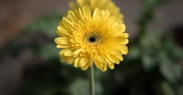 Flor amarelo em um jardim