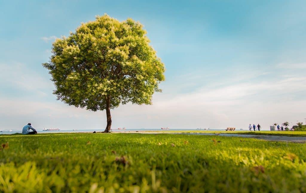 Árvore isolada em um campo, vista durante um dia ensolarado.