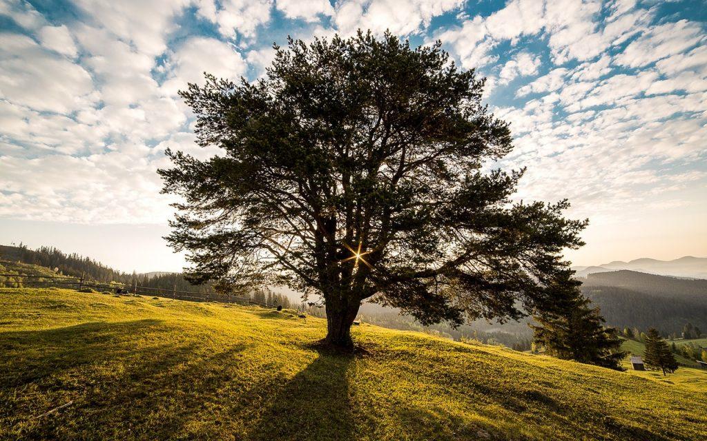 Árvore vista contra a luz do sol em um parque, em um dia ensolarado.